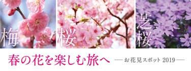 春の花特集