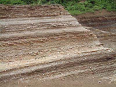 木の葉化石園