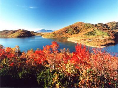 野反湖紅葉