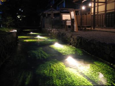 地蔵川(梅花藻)