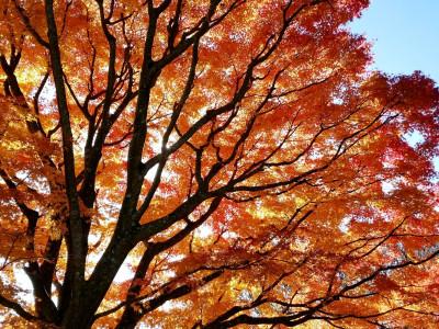 姫の沢公園 紅葉