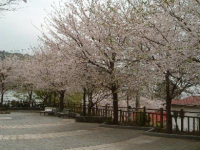 熱川桜坂公園
