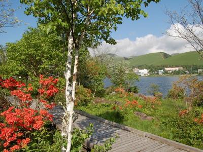 白樺湖とレンゲツツジ