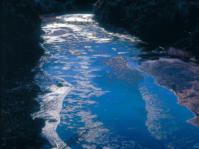 久慈川のシガ