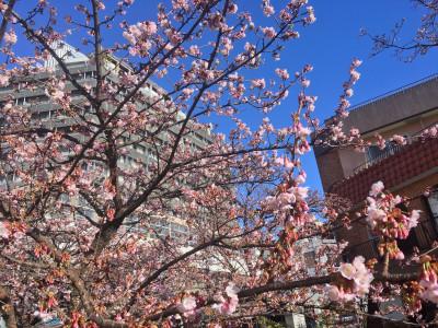 糸川桜まつり