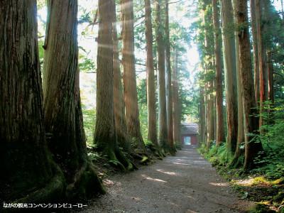 戸隠神社 奥社参道杉並木