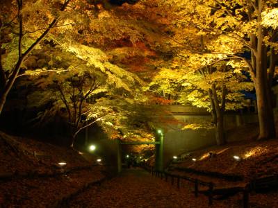 上田城けやき並木ライトアップ