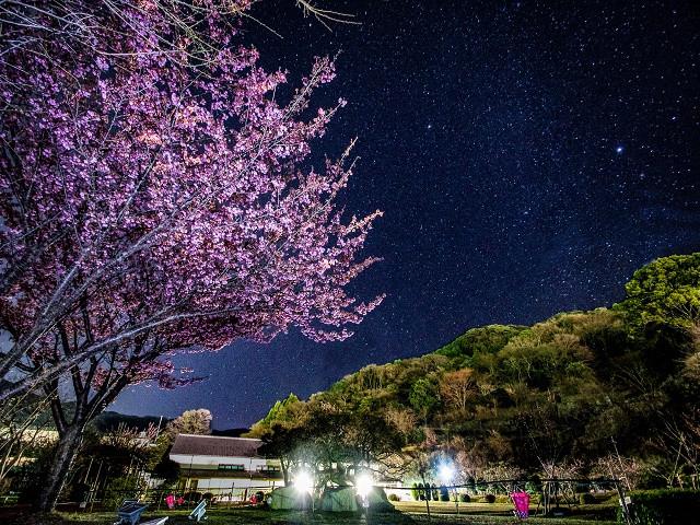 土肥金山夜桜ライトアップ