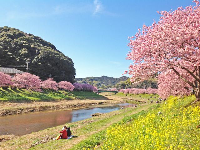 青い空と桜の風景