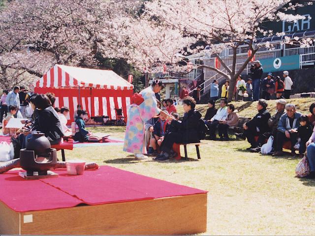 駿河湾をバックに桜が咲き誇ります。