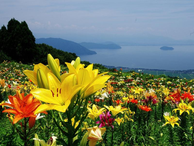 丘 見える 琵琶湖 の
