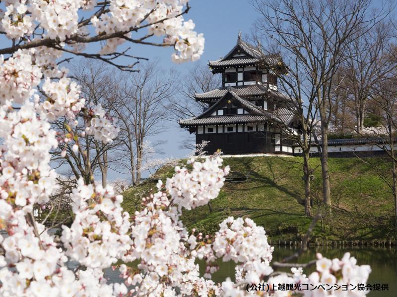 桜と高田城三重櫓