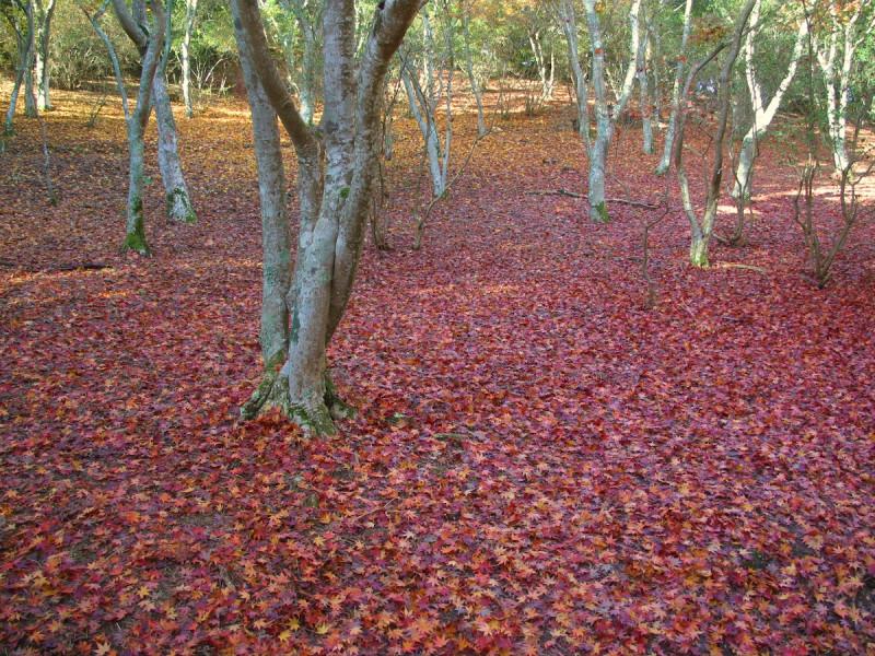 紅葉の様子3