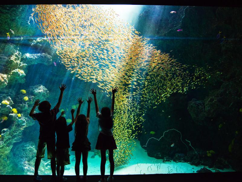 サンゴ礁の幻想的な雰囲気が魅力的!